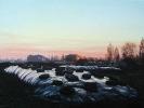 Abend mit Miete, Öl auf Leinwand, 50 x 70