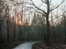 Waldweg Abend, Öl auf Leinwand, 90 x 110
