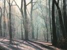 Waldstück,2020,Öl auf Leinwand, 50 x 100