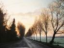 Morgendliche Allee, 2020, Öl auf Leinwand, 50 x 60_1