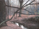 Waldstück, 2019, Öl auf Leinwand, 30 x 60_1