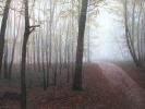 Waldweg, Öl auf Leinwand, 90 x 170_1