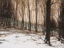 Winter/ Siebengebirge II, Öl auf Leinwand, 24 x 30 _1
